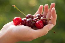 Free Cherries In Hand Stock Photo - 25142350