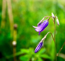 Free Bluebells Stock Images - 25144384