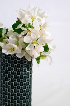 Free Apple Tree Flowers In A Retro Vase Stock Photo - 25144920