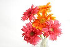 Free Orange Gerbera Royalty Free Stock Photos - 25147608