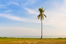 A Coconut Palm Tree On Sea Shore Royalty Free Stock Photos