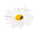 Free Honey Bee Collecting Nectar On A Flower Stock Photography - 25151902