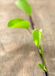 Free Fragile Green Plant Emerging Through Wooden Stacks Royalty Free Stock Image - 25152276