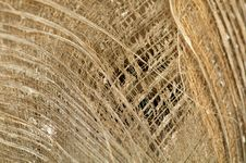 Free Dry Palm Leaf Background Royalty Free Stock Images - 25152289