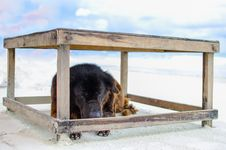 Free The Dog On The Beach Stock Image - 25154001