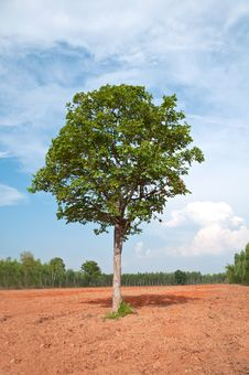 Free A Single Tree In The Field Stock Images - 25154324