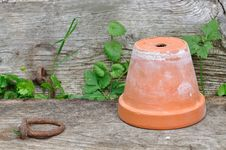Free Terracotta Pot On Board Stock Image - 25165881
