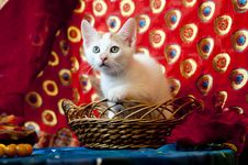 Free Kitty In A Basket Royalty Free Stock Images - 25176629