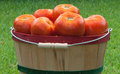 Free Red Ripe Tomatoes In Basket Stock Photo - 25184860