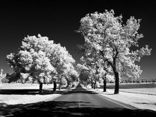 Free Ash Lane In Infrared Stock Photo - 25186430