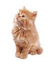 Free Kitten The Red Looks Up Royalty Free Stock Images - 25197149