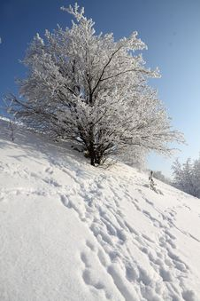 Free Winter Landscape Of A Tree Stock Photo - 25197870