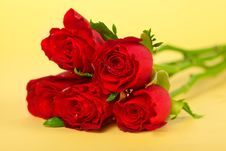 Free Red Rose Over Yellow Royalty Free Stock Image - 25199226