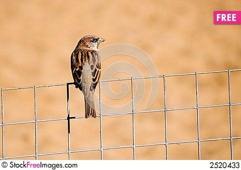 Free Sparrow On The Fence Stock Photos - 2520433