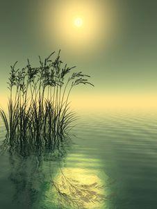 Free Water Grass Stock Image - 2523801