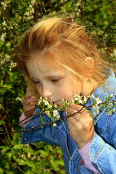 Free The Small Girl Noses A Flowers Royalty Free Stock Photography - 2524957