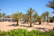 Free Palm Sand Beach Stock Images - 2525624