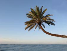 Free Palm Beach Stock Photo - 2526550