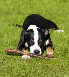 Free Young Dog Stock Photography - 2527182