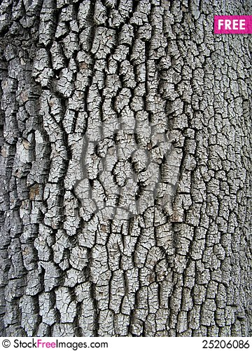 Free Bark Texture Royalty Free Stock Image - 25206086