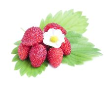 Free Wild Strawberries Royalty Free Stock Photography - 25202347