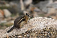 Free Ground Squirrel Atop A Rock Royalty Free Stock Photo - 25205875