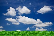 Free Green Grass Over A Blue Sky Royalty Free Stock Photos - 25206388
