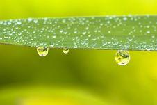 Free Raindrops Royalty Free Stock Image - 25208956