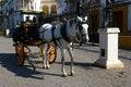 Free White Horse Carriage. Royalty Free Stock Photos - 25214208
