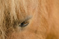 Free Eye Of Horse Royalty Free Stock Photo - 25210175