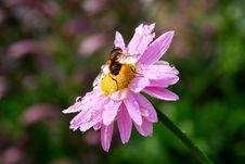 Free Bee Stock Photography - 25211572