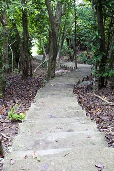 Free Stairway In The Jungle Stock Images - 25212794