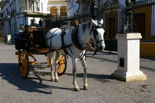 Free White Horse Carriage. Royalty Free Stock Photos - 25214208