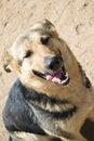 Free Smiling Dog Royalty Free Stock Image - 25229886