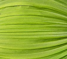 Free Green Leaf Background Stock Images - 25227514