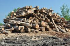 Free Wood Set Royalty Free Stock Image - 25230386
