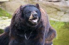 Free Bear Royalty Free Stock Photography - 25235017