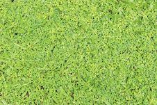 Free Grass And Non-grass Stock Photo - 25237380
