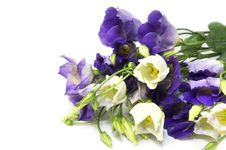 Free Flowers Royalty Free Stock Images - 25239819