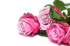 Free Flowers Stock Photography - 25239822