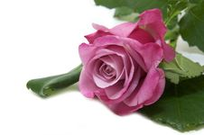 Free Flowers Stock Image - 25239841