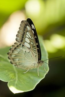 Free Butterfly Royalty Free Stock Photo - 25242885