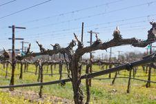 Free Vineyard In Spring Royalty Free Stock Image - 25243176