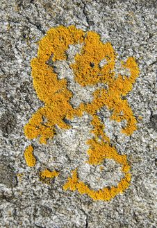 Free Yellow Moss Formation Royalty Free Stock Photography - 25248107