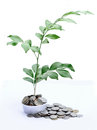 Free Tree Growing On Baht Coins Stock Image - 25250031
