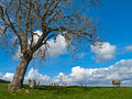 Free Sheep In The Lake District Stock Photography - 25255302