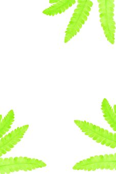Free Leaves  Background Royalty Free Stock Photos - 25253328