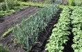 Free Vegetable Garden. Stock Photos - 25269133