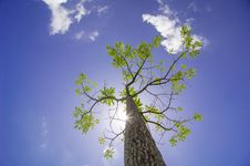 Free Tree Under The Sunshine Day, Thailand Royalty Free Stock Images - 25261419