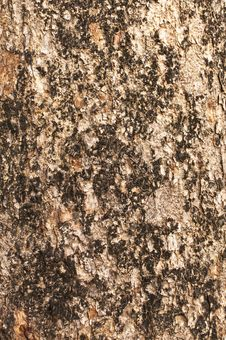 Free Bark Moss Texture Stock Photos - 25262283